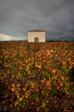 Long after the Harvest: Autumnal November at La PèiraPhoto Credit: Georges Souche